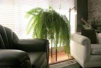 plant-best-single22