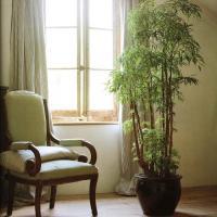 plant-best-single3