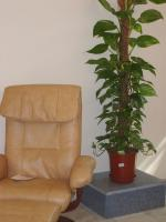 plant-best-single5