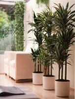 plant-best-single7
