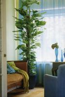 plant-best-single8