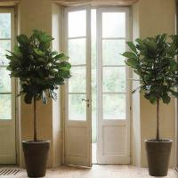 plant-best-single9