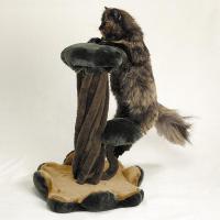 pets-furniture-cats10