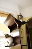pets-furniture-cats20