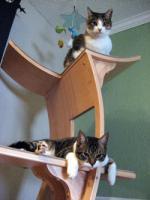 pets-furniture-cats21