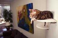 pets-furniture-cats28