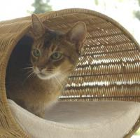 pets-furniture-cats7