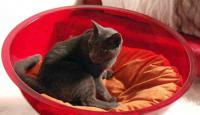 pets-furniture-cats9