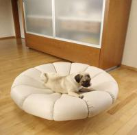 pets-furniture-dogs2
