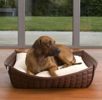pets-furniture-dogs5