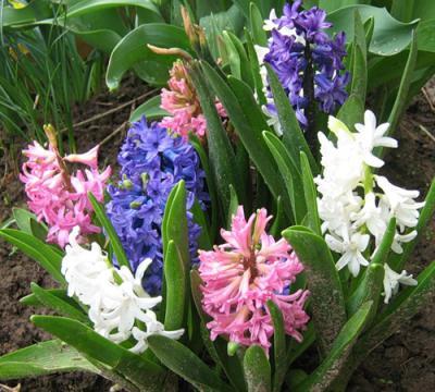 spring-inspire-giacint-fl1