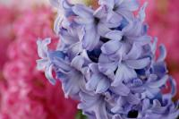 spring-inspire-giacint-fl3