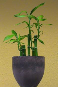 bamboo-decor-ideas-plant1