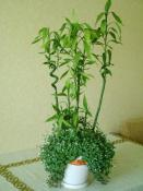 bamboo-decor-ideas-plant5
