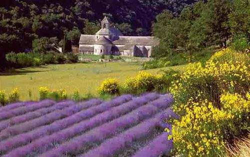 french-provence-style-lavander-field