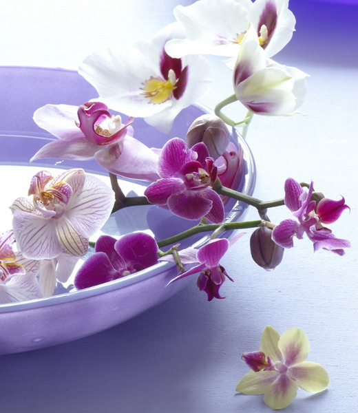wonderful-orchids-ideas