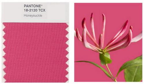 honeysuckle-pantone-color2011
