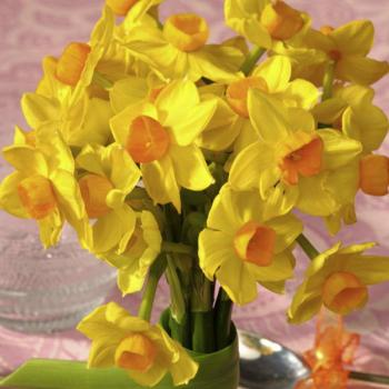spring-flowers-new-ideas-narcissus