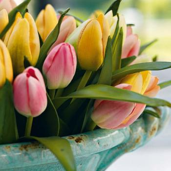 spring-flowers-new-ideas-tulip