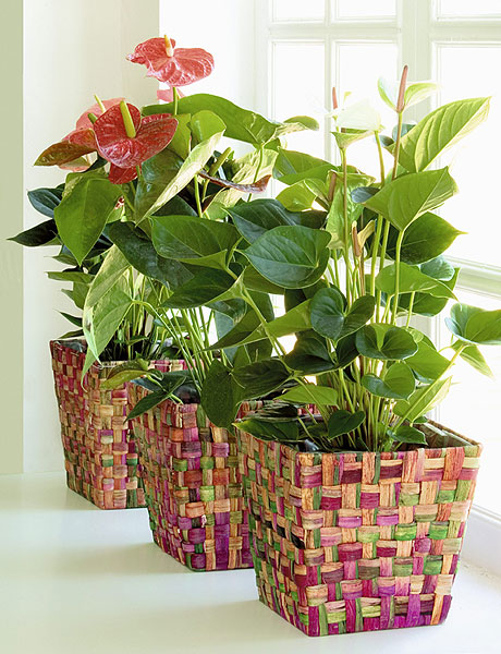 home-plants-creative-ideas