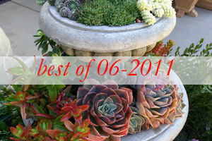 best10-succulent-garden-in-home-and-outdoor