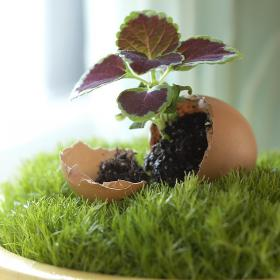 flowers-in-egg-shell-ideas12