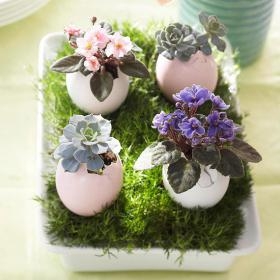 flowers-in-egg-shell-ideas9