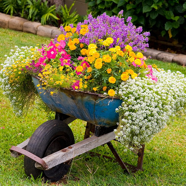 garden-flowers-mix-in-container