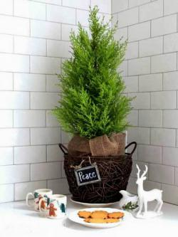 tiny-coniferous-winter-decor1-5