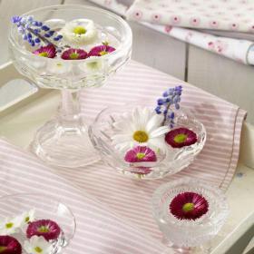 bellis-perennis-spring-decorating13