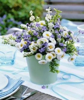 bellis-perennis-spring-decorating15