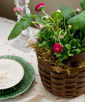 bellis-perennis-spring-decorating16
