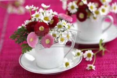 bellis-perennis-spring-decorating21