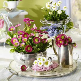 bellis-perennis-spring-decorating5