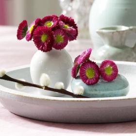 bellis-perennis-spring-decorating7