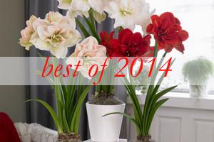 best-2014-decor-ideas8-amaryllis-centerpiece-ideas