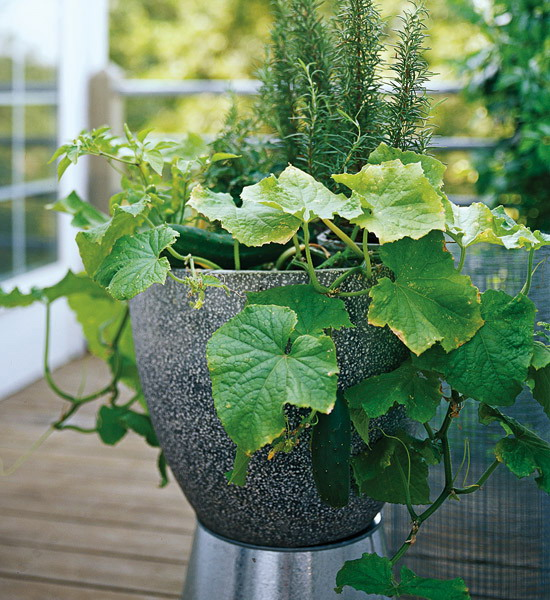 design-ideas-to-grow-veggies-in-containers12