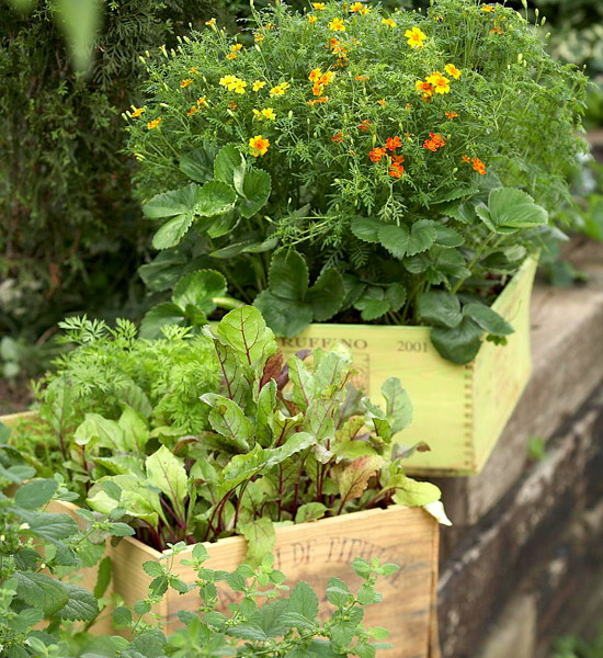 design-ideas-to-grow-veggies-in-containers3