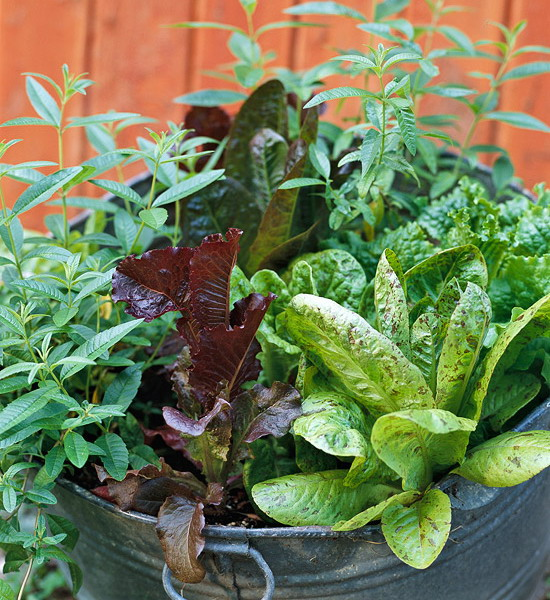 design-ideas-to-grow-veggies-in-containers6