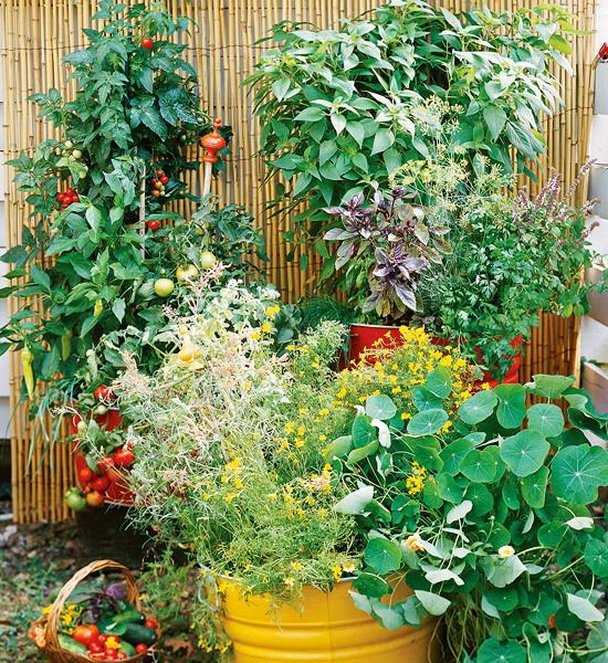 design-ideas-to-grow-veggies-in-containers9
