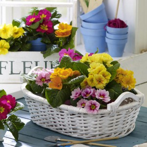 spring-flowers-creative-vases4-1-1