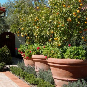 creative-use-large-pots-and-containers-in-garden18-2
