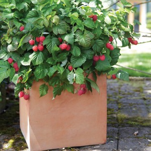 creative-use-large-pots-and-containers-in-garden22-1