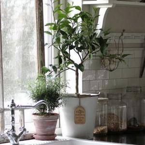 garden-inspired-look-in-home13-2