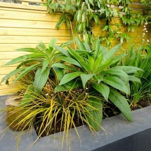 how-to-create-no-fuss-garden1-3