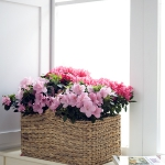 add-southern-charme-in-livingroom-inspire5.jpg