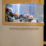 aquarium-in-home-interior31.jpg