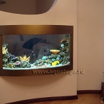 aquarium-in-home-interior39.jpg