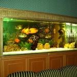 aquarium-in-traditional-home4.jpg