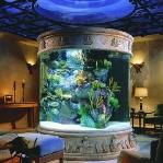 aquarium-in-traditional-home8.jpg